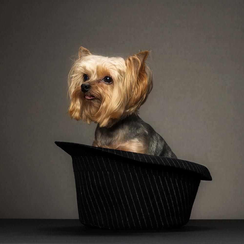 צילום פורטרט לכלב