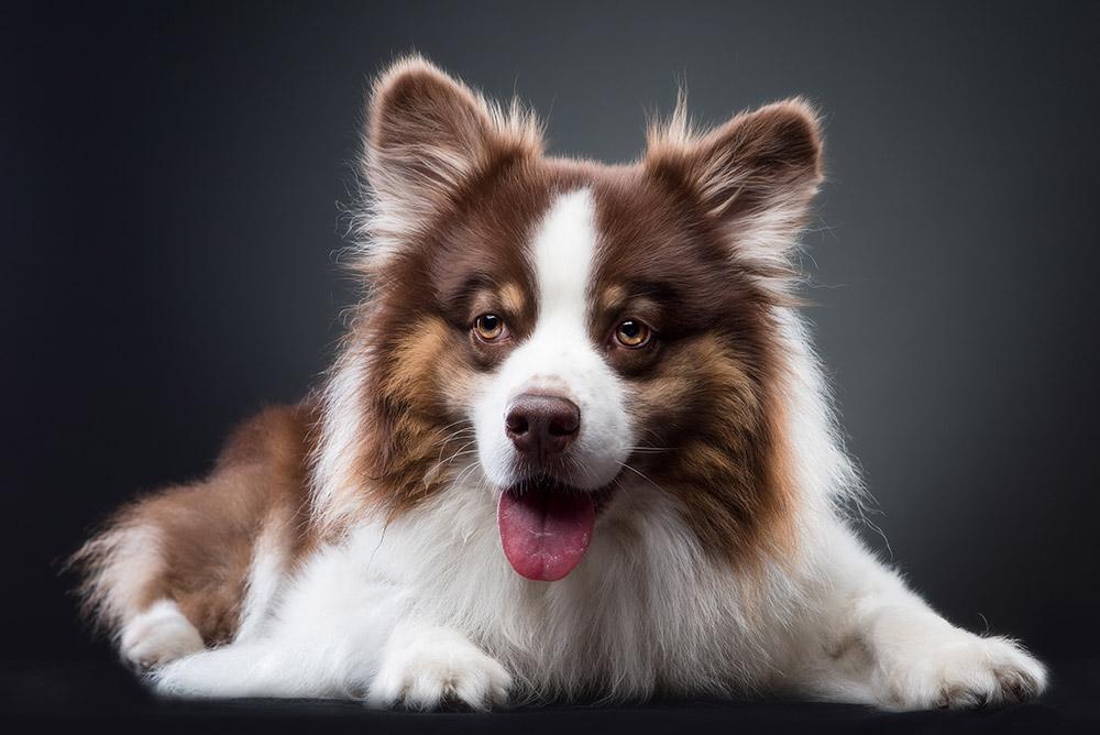 צילום כלבים בסטודיו