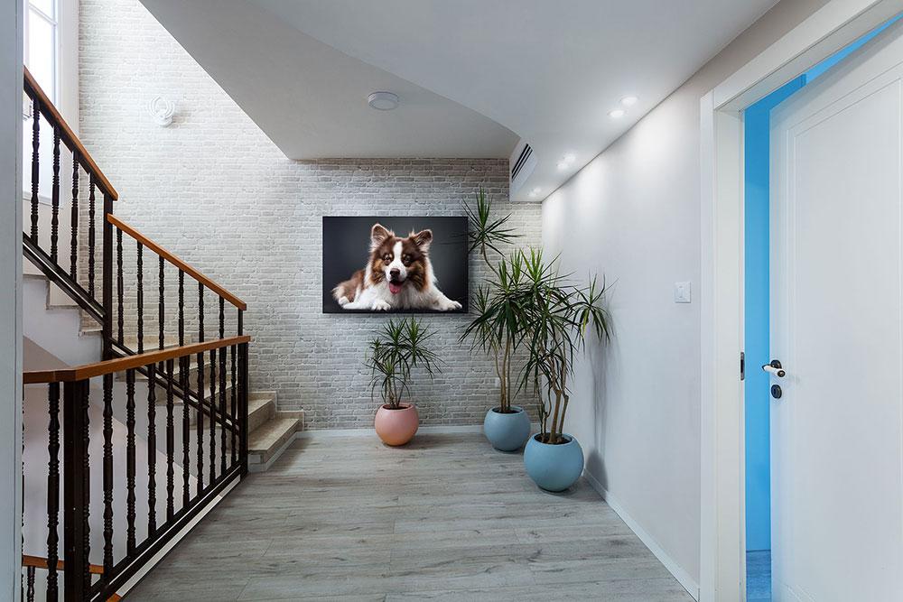 צילום כלב בסטודיו