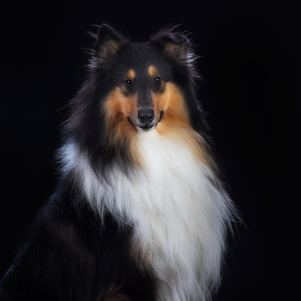 צילום דיוקן לכלב