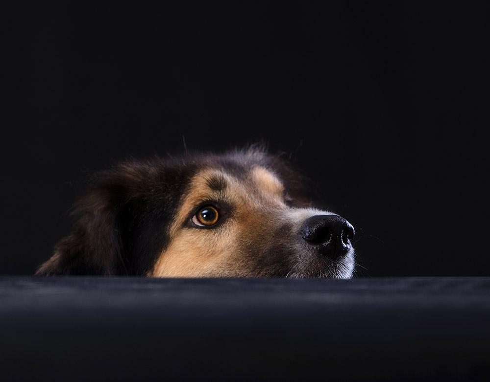 צילום כלב
