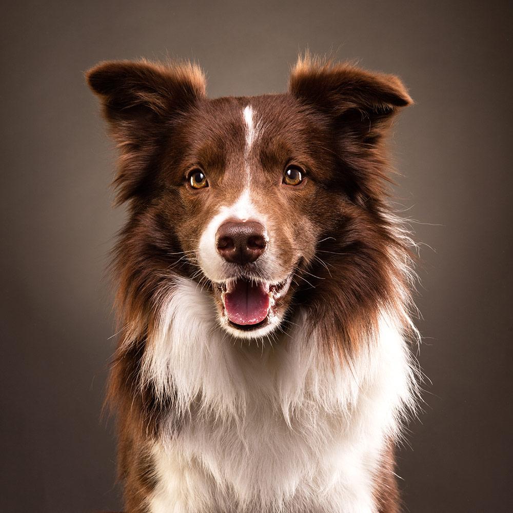 צילומי פורטרט לכלב
