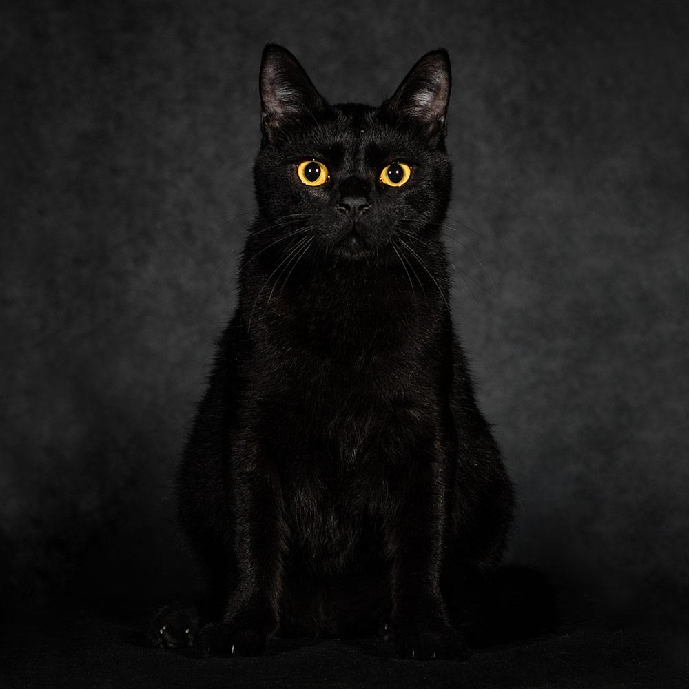 צילום חתולים בסטודיו