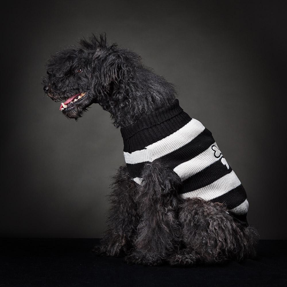 צילום כלב בסטודיו מקצועי