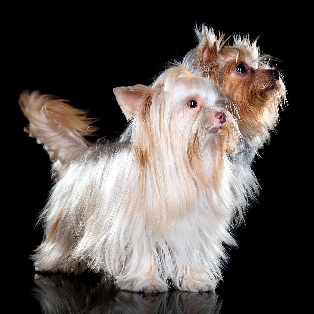 צילום כלבים