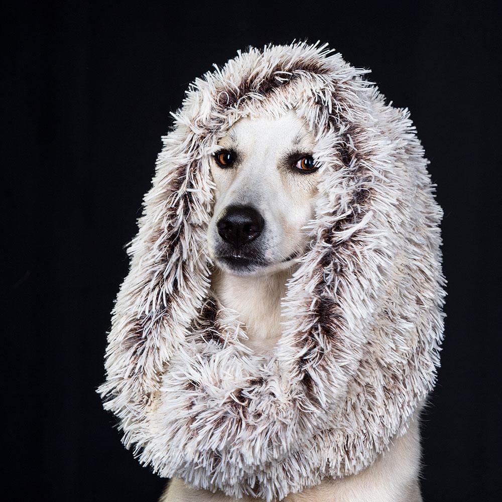 צילום כלבים בסטודיו מקצועי